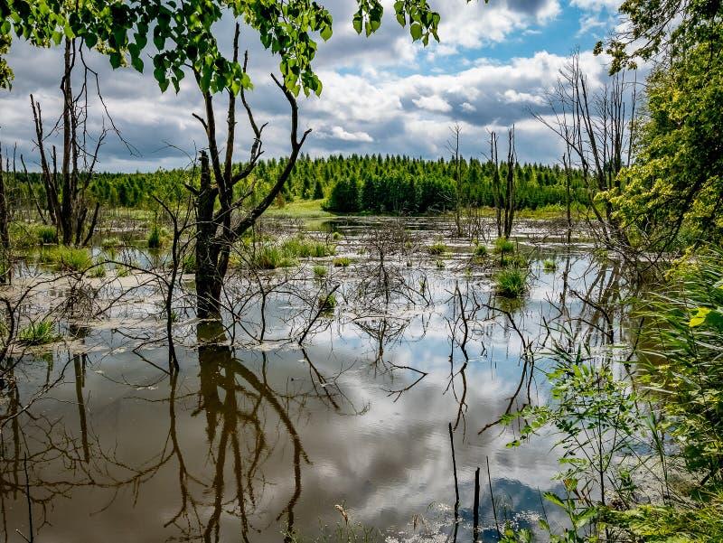 Schöner und mysteriöser sumpfiger Wald stockfoto