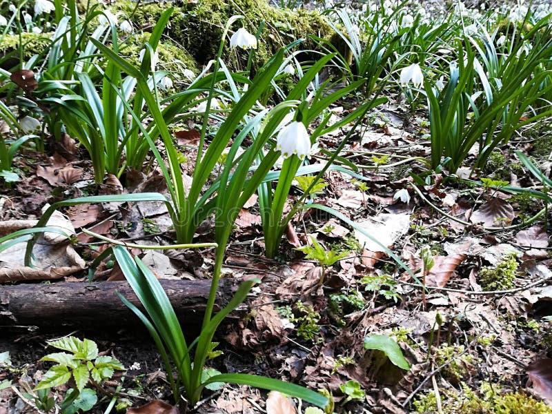Schöner und netter Frühling blüht in der Natur stockfoto