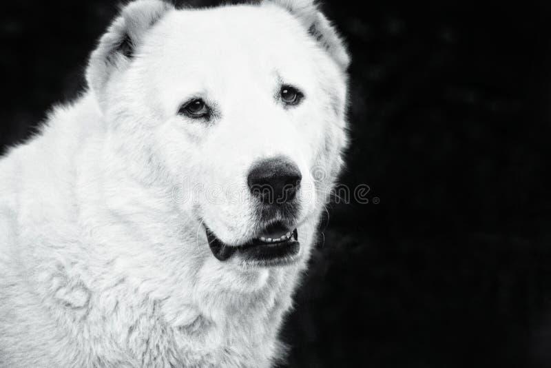 Schöner und Stärke-Hund lizenzfreies stockbild
