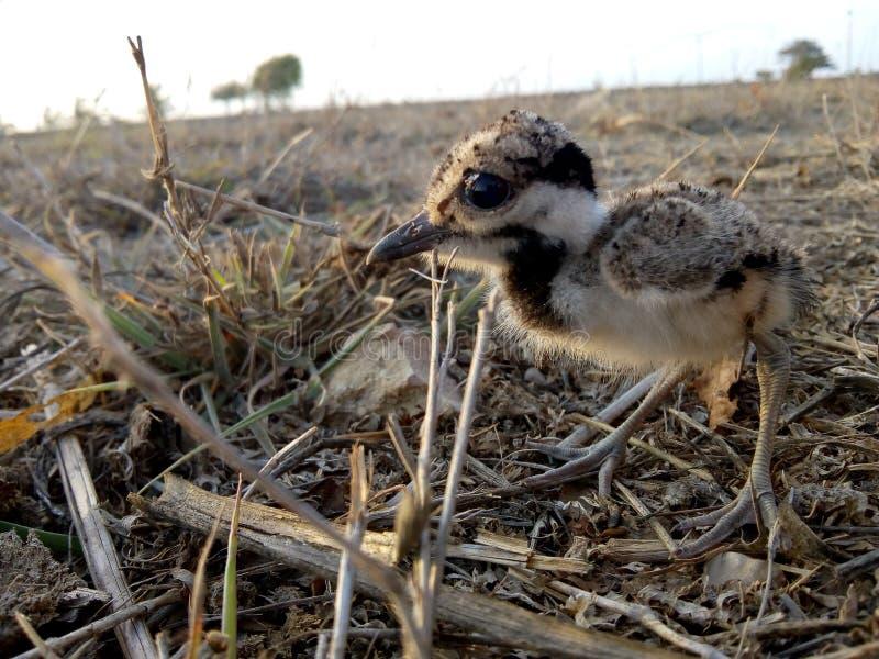 Schöner Vogel lizenzfreies stockfoto