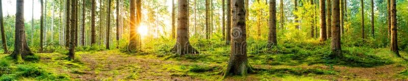 Schöner Wald bei Sonnenaufgang stockbild