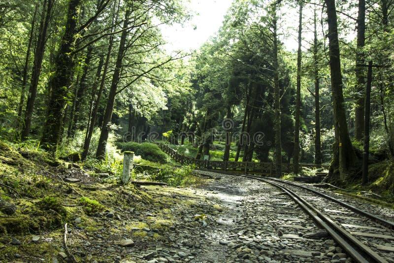 Schöner Wald mit verlassener Eisenbahn stockfoto