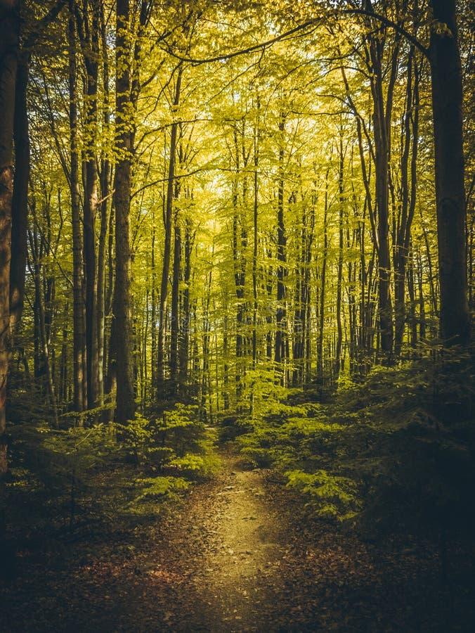 Schöner Weg im Sommerwald lizenzfreies stockfoto