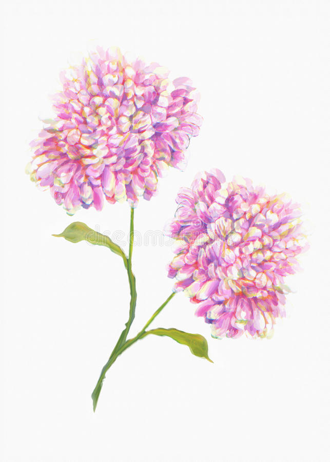 Schöner Weißer Hintergrund Der Blume Buntes Dekoratives Blumen Stock ...