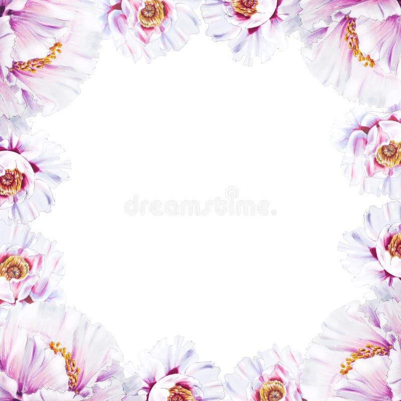 Schöner weißer Pfingstrosengrenzrahmen Blumenstrau? von Blumen Blumendruck Markierungszeichnung stock abbildung