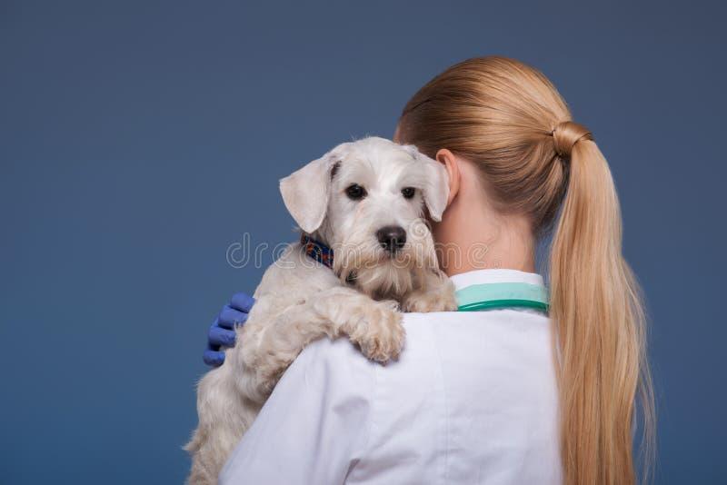 Schöner weiblicher Tierarzt, der netten Hund hält lizenzfreie stockfotografie