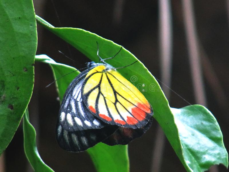 Schöner wilder Schmetterling lizenzfreie stockfotografie