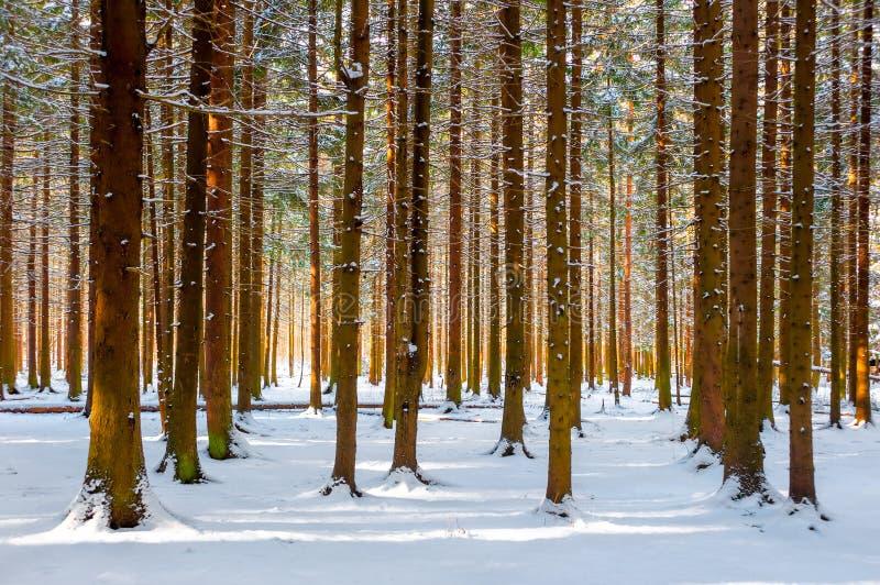 Schöner Winterwald lizenzfreie stockbilder