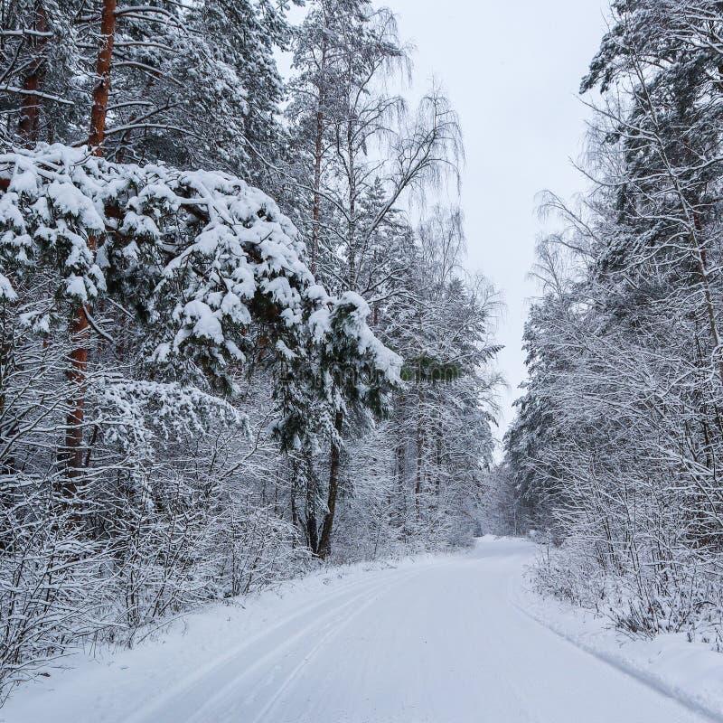 Schöner Winterwald mit schneebedeckten Bäumen und einer weißen schneebedeckten Straße Kiefernniederlassung über der Straße und vi stockbild