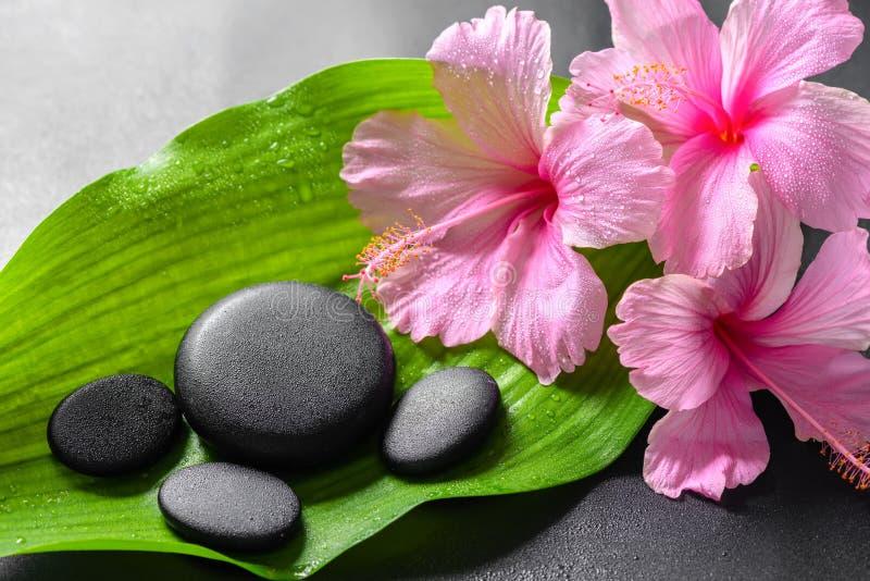 Schönes Badekurortkonzept von rosa Hibiscusblumen und von Zenbasaltst. stockfoto