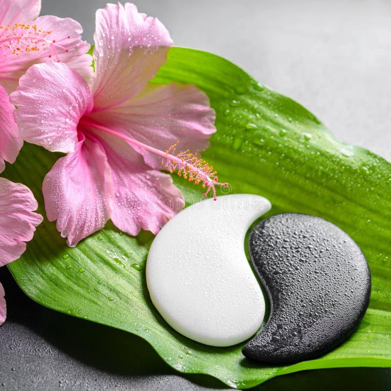 Schönes Badekurortkonzept von rosa Hibiscusblumen und Yin-Yang von s stockbilder