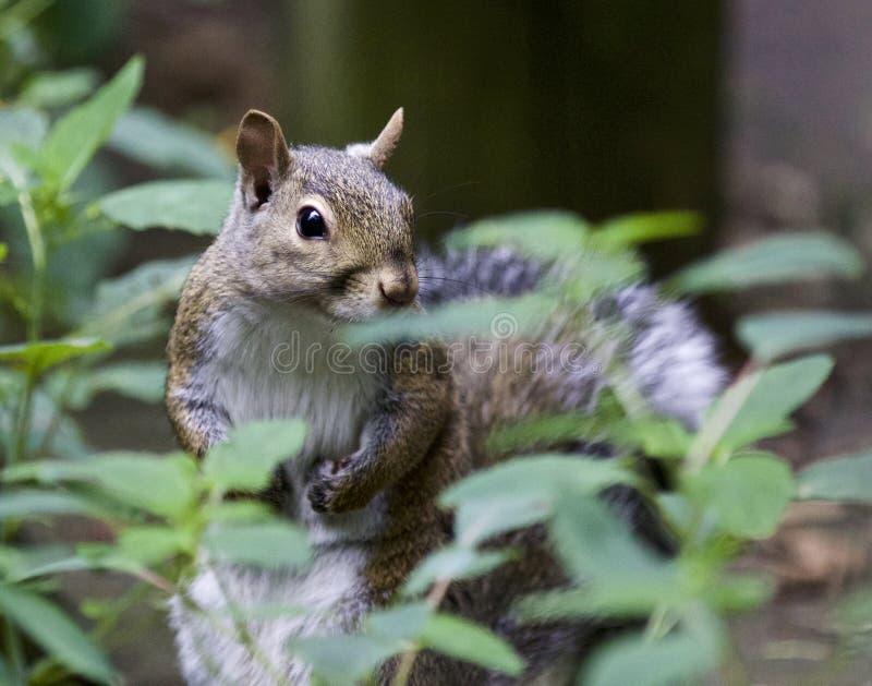 Schönes Bild mit einem netten lustigen Eichhörnchen im Gras lizenzfreie stockbilder