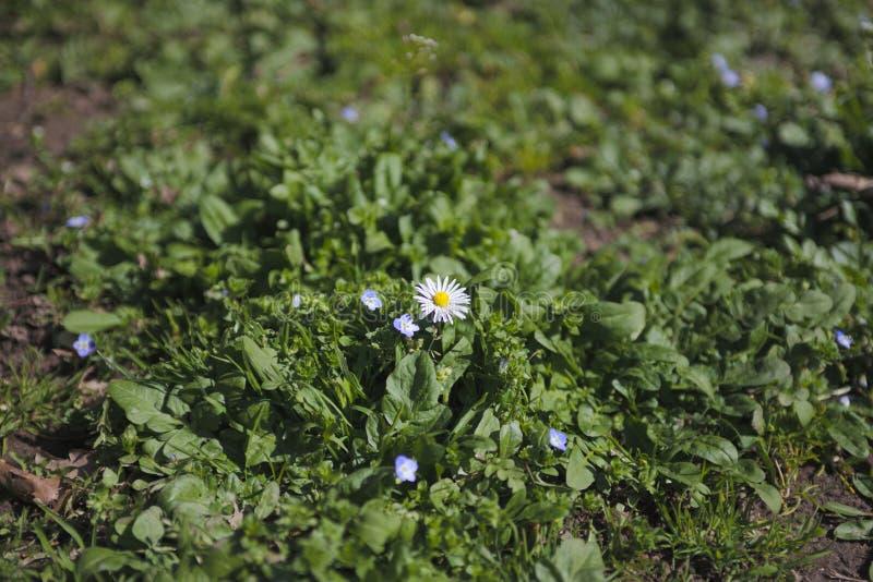 Schönes Blumenfeld im schwarzen hölzernen Wald lizenzfreie stockfotografie