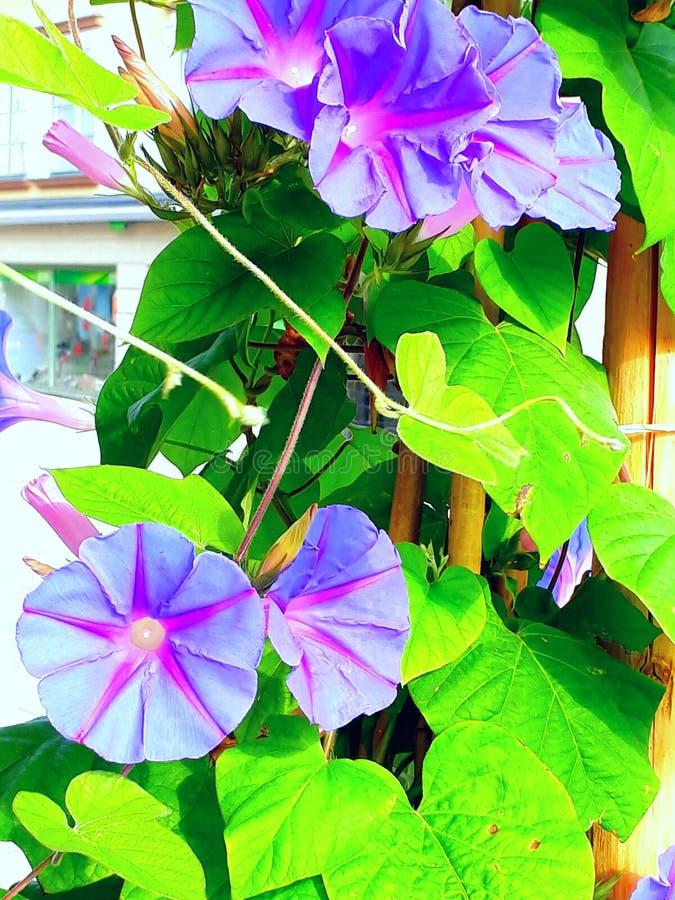 Schönes Blumenwachsen im Sommer stockfoto