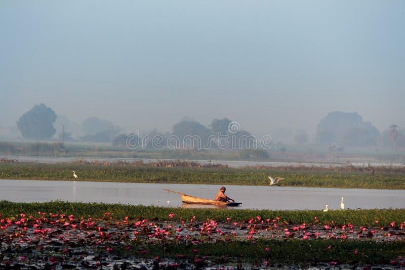 Schönes Boot im Lotosblumensee stockfotografie