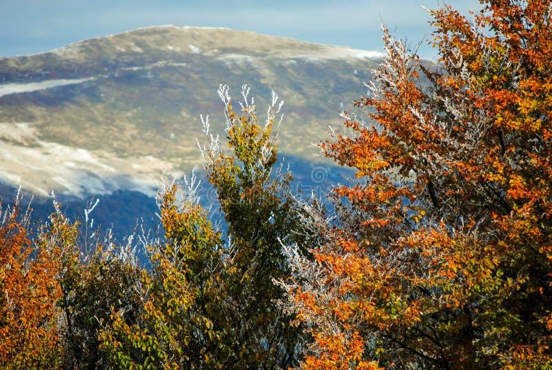 Schönes buntes gefrorenes Laub im Herbst lizenzfreie stockfotos