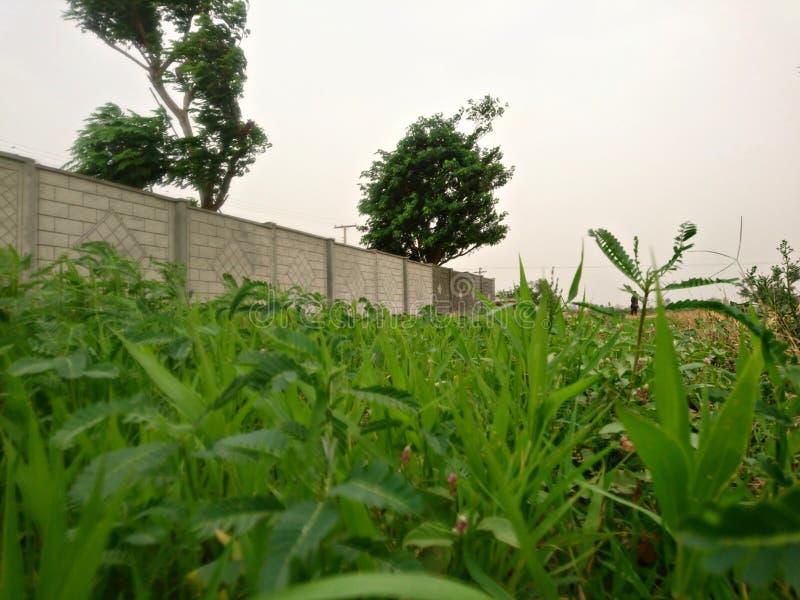 Schönes Dorf mit Gras stockbilder