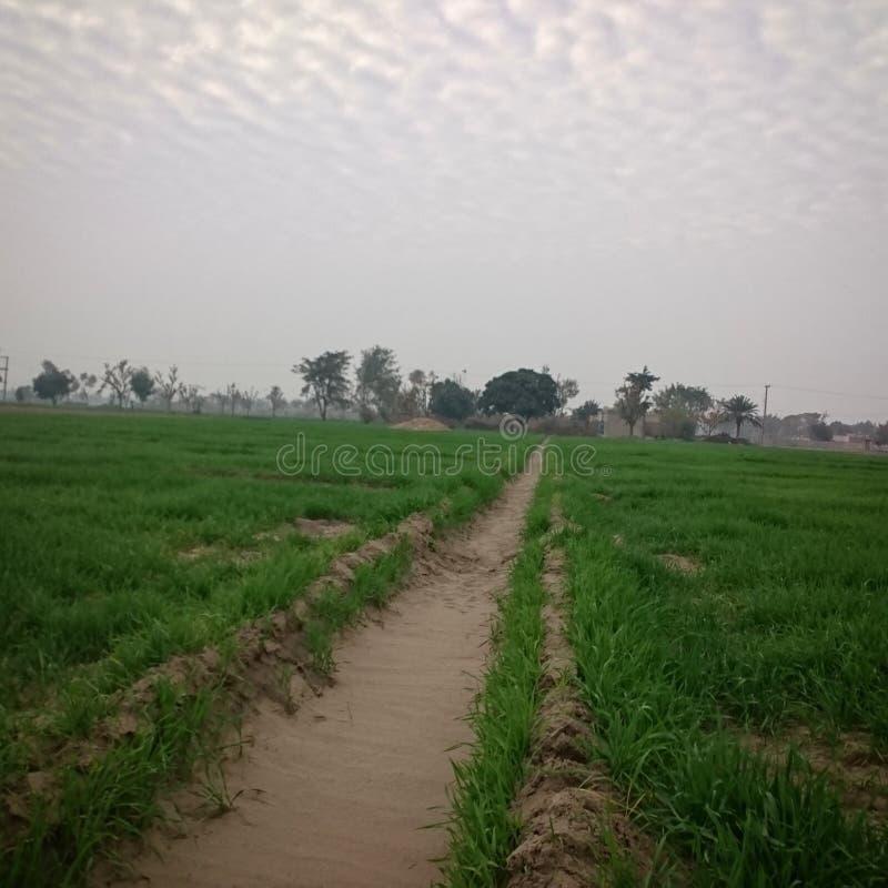 Schönes Dorf mit Gras und Schönheit stockfoto