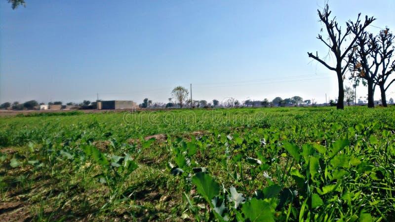 Schönes Dorf mit Gras und Schönheit stockfotografie