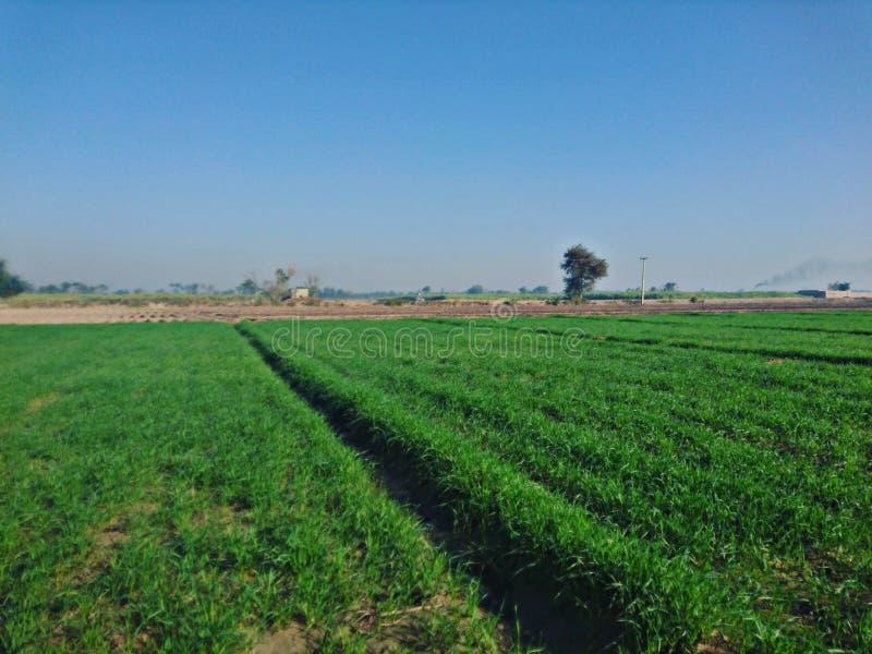 Schönes Dorf mit Gras und Schönheit lizenzfreies stockfoto