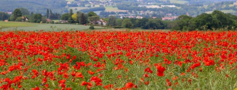 Schönes Feld der roten Mohnblume blüht an Ende Mai Langes Fahnenformat stockbilder
