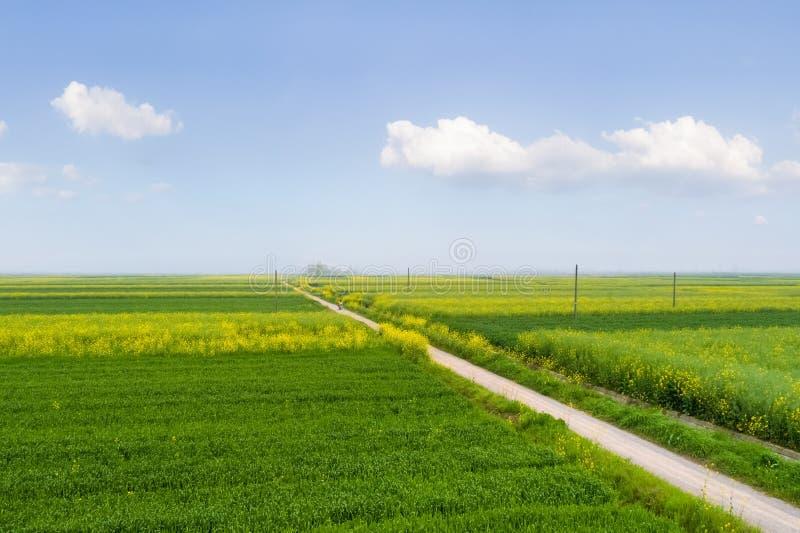 Schönes Feld im Frühjahr stockbilder