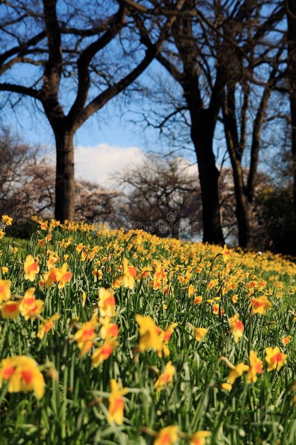 Schönes Frühjahr stockbilder