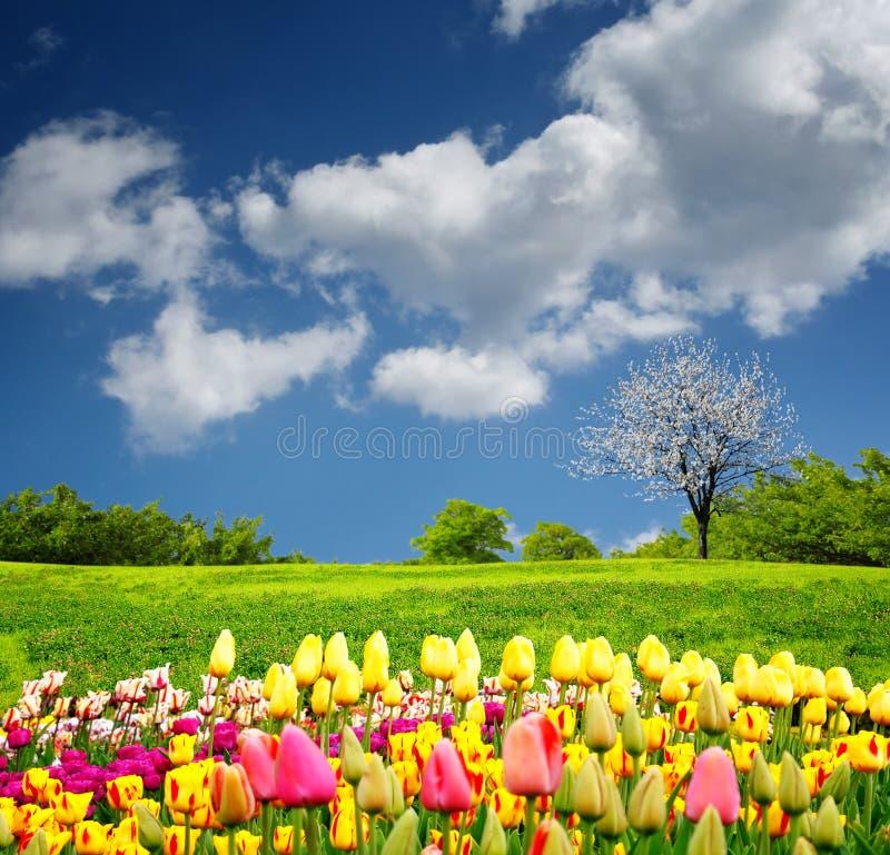 Schönes Frühlingsfeld lizenzfreies stockbild