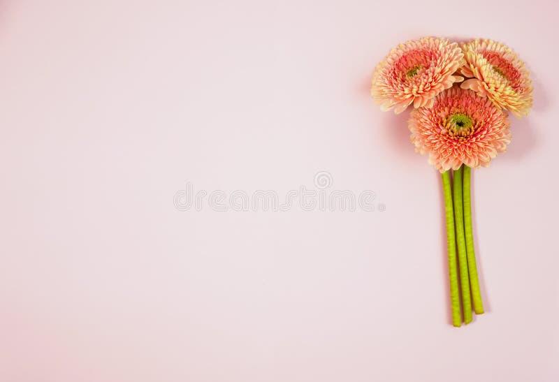 Schönes Frühlingsrosa blüht auf blauer Pastelltischplatteansicht Rosafarbener Blumenrand flache Lageart lizenzfreie stockfotografie