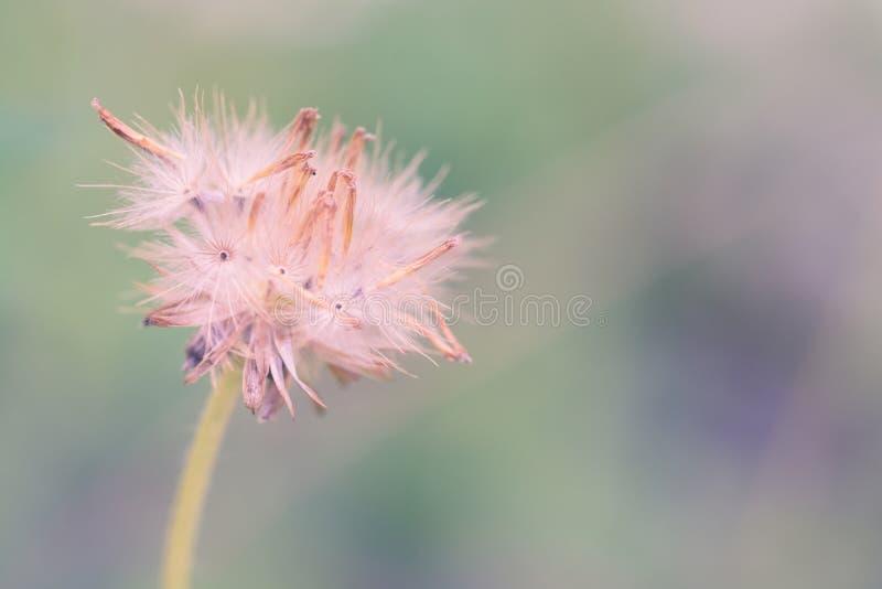Schönes frisches der Blume im weichen warmen Licht Herbstlandschaft vorüber stockfoto