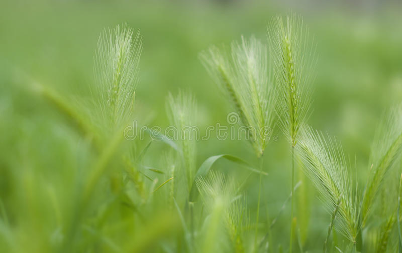 Schönes grünes Feld lizenzfreie stockfotografie