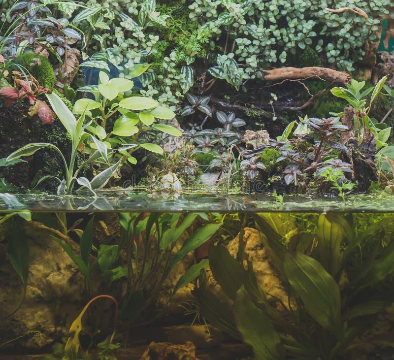 Schönes grünes Frischwasseraquarium lizenzfreie stockfotos