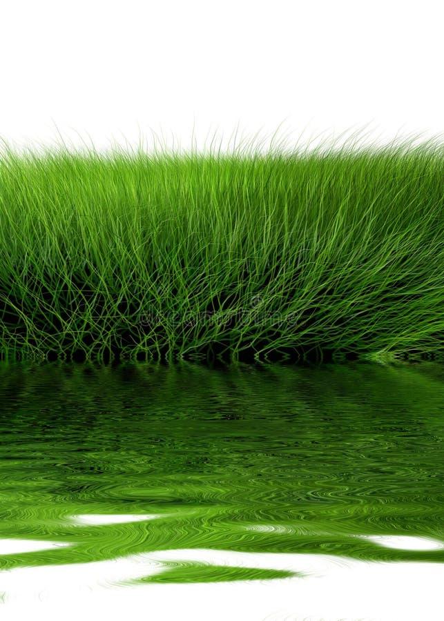 Schönes grünes Gras vektor abbildung