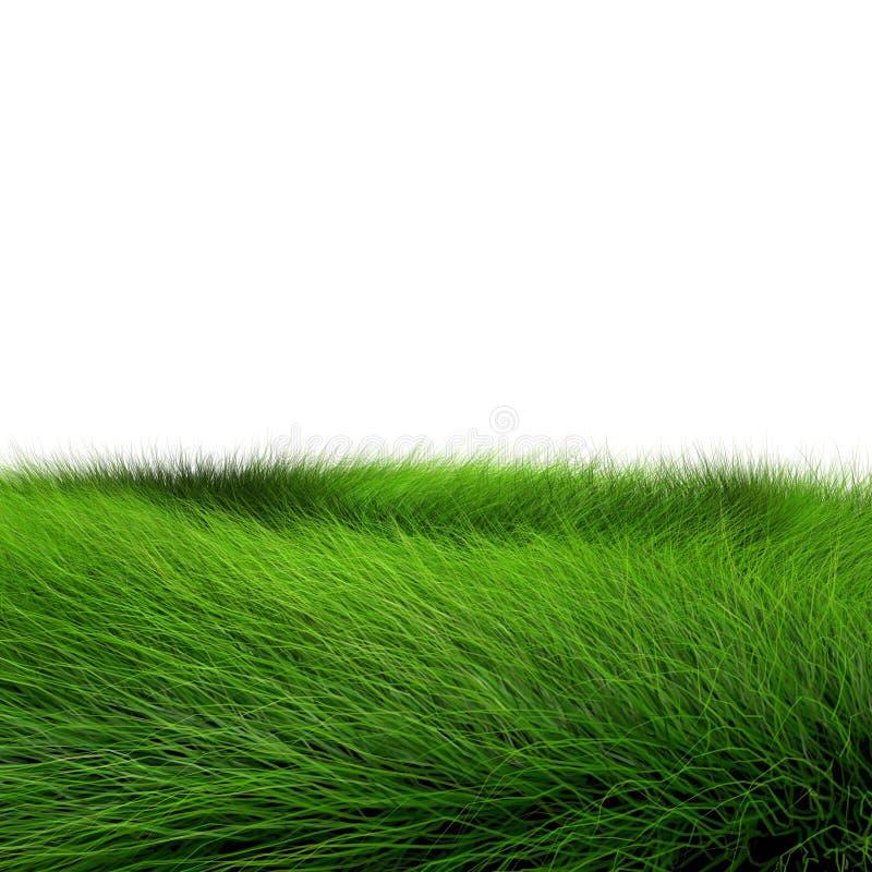 Schönes grünes Gras lizenzfreie abbildung