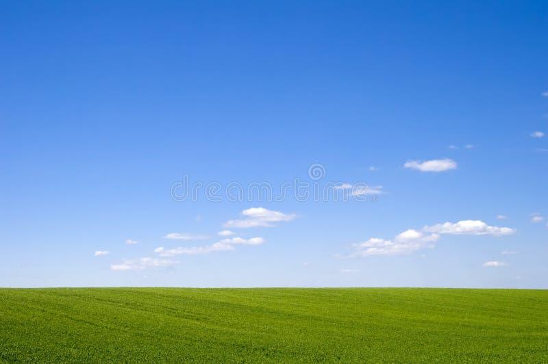 Schönes grünes Gras und blauer Himmel stockfotografie