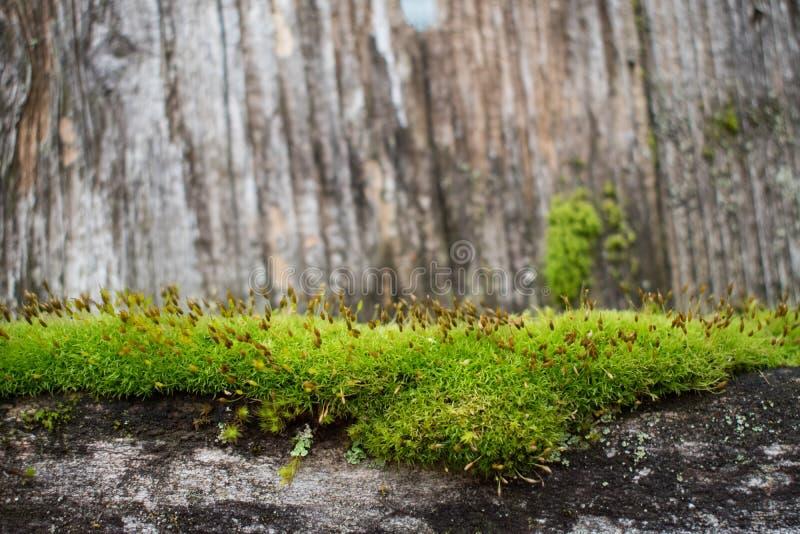 Schönes grünes Moos auf Zaun stockfotos