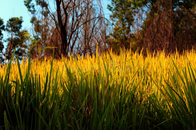 Schönes Gras stockbild