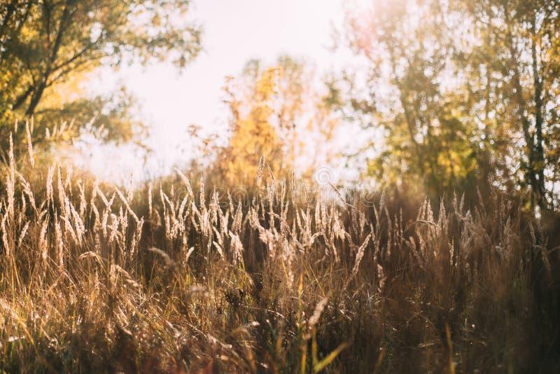 Schönes Herbstansicht-Feldgras lizenzfreie stockfotografie