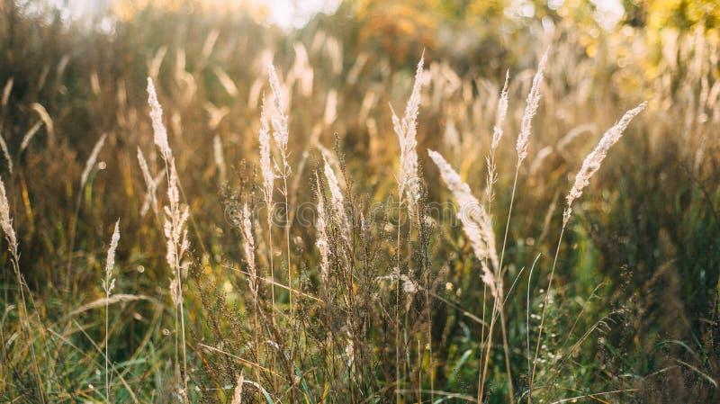 Schönes Herbstansicht-Feldgras stockbilder