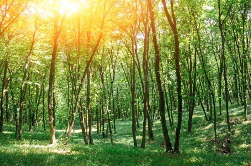 Schönes Holz bei dem Sonnenuntergang Schutz der Flüsse, die Meere, Ozeane lizenzfreie stockfotografie