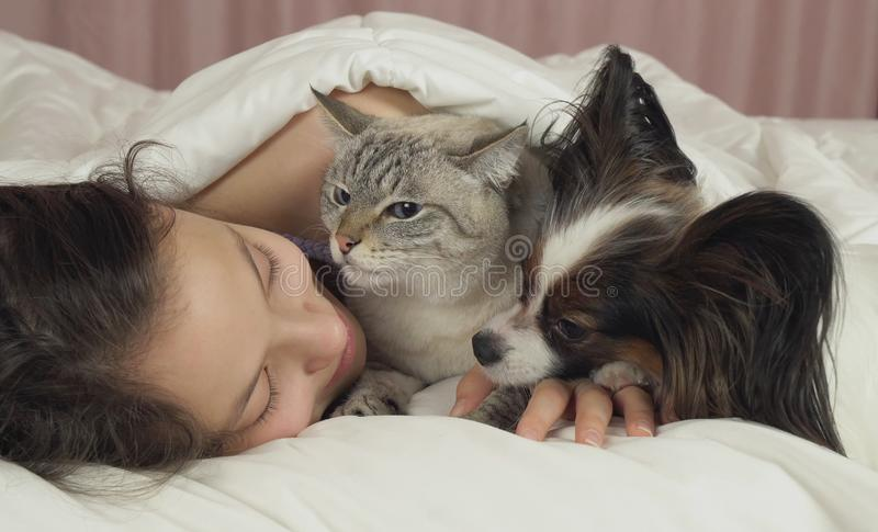 Schönes jugendlich Mädchen, das süß im Bett mit Hund und Katze schläft stockfotos