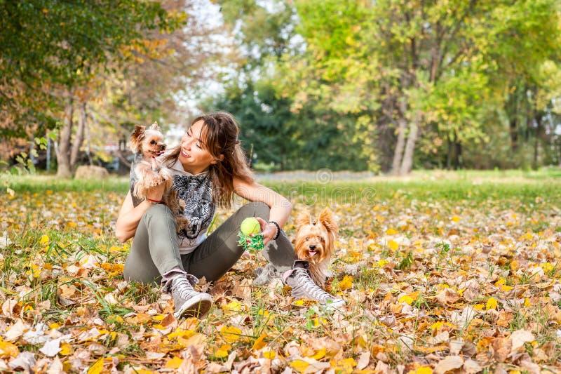 Schönes junges Mädchen mit ihrem Yorkshire-Terrierhundewelpen, der am Herbsttag im selektiven Fokus des Parks genießt und spielt lizenzfreie stockfotografie