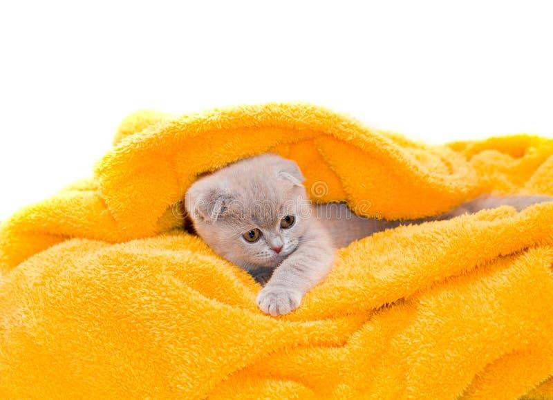 Schönes Kätzchen lizenzfreies stockbild