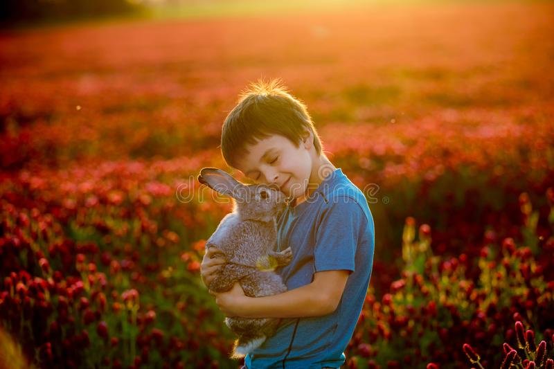 Schönes Kind mit nettem Häschen auf dem herrlichen Inkarnatkleegebiet stockfotografie