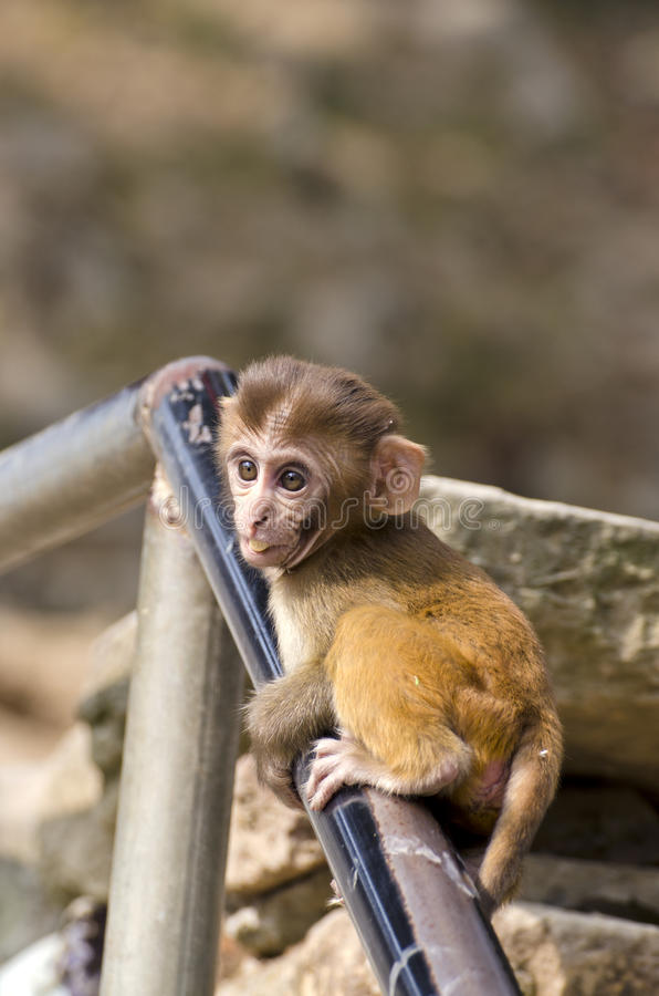Schönes kleines Affebaby auf Treppenhauszaun stockfotos