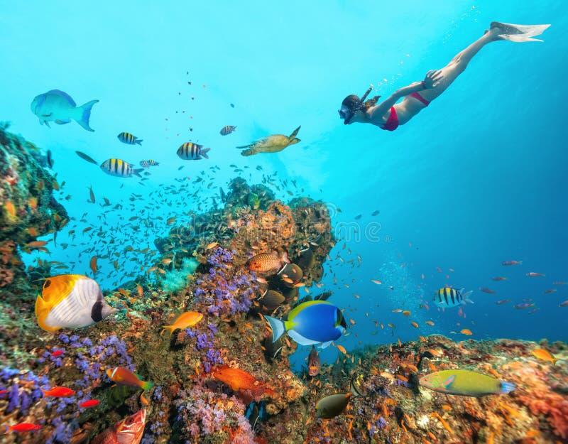 Schönes Korallenriff mit junger freediver Frau lizenzfreies stockfoto