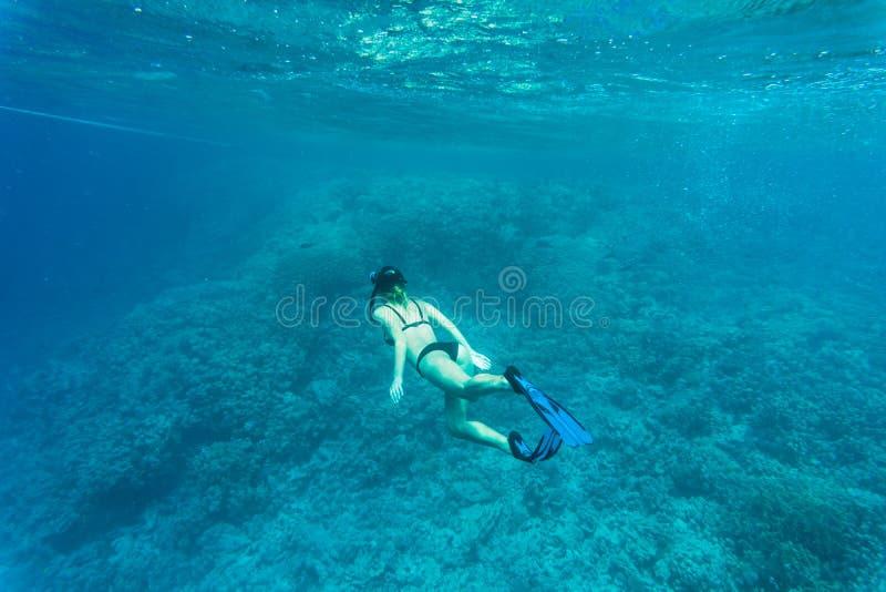 Schönes Korallenriff mit junger freediver Frau, Unterwasserleben Copyspace für Text stockfotografie