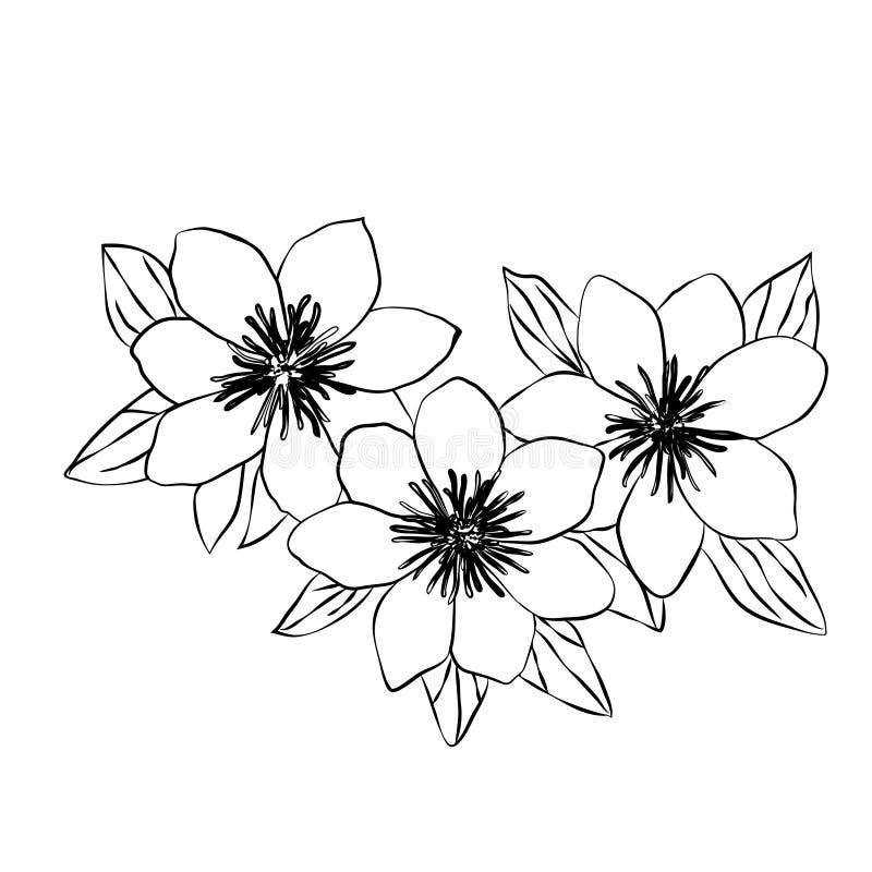 Schönes lokalisierte Skizze des Klematisschwarzen Weiß lizenzfreie abbildung