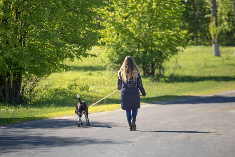 Schönes Mädchen mit einem Hund auf einem Weg stockbild
