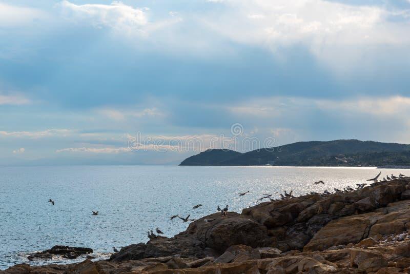 Schönes Meer stockfotos
